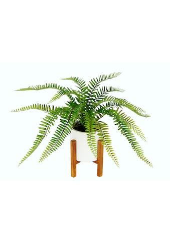 I.GE.A. Kunstpflanze »Farnbusch«, Im Topf mit Gestell kaufen