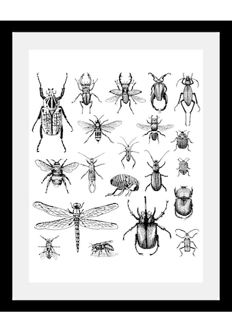 queence Bild »Käfer«, in 3 Größen, gerahmt kaufen