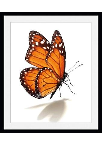 queence Bild »Eazy«, Schmetterlinge, (1 St.) kaufen