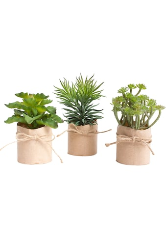 Botanic-Haus Kunstkaktus »Sukkulentensortiment« kaufen