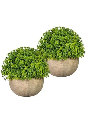 Home affaire Künstliche Zimmerpflanze »Voulon«, im Paperpot, 2er Set kaufen