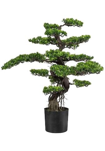 Creativ green Kunstbonsai »Bonsai« kaufen