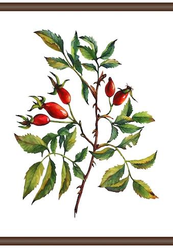 queence Leinwandbild »Hagebutte«, 50x70 cm kaufen