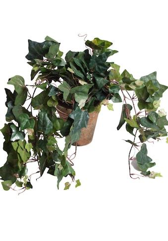 Botanic-Haus Künstliche Zimmerpflanze »Efeuhängebusch« kaufen