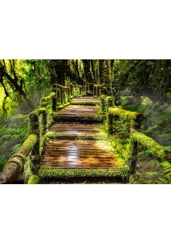 Papermoon Fototapete »Rainforest at Ang Ka« kaufen