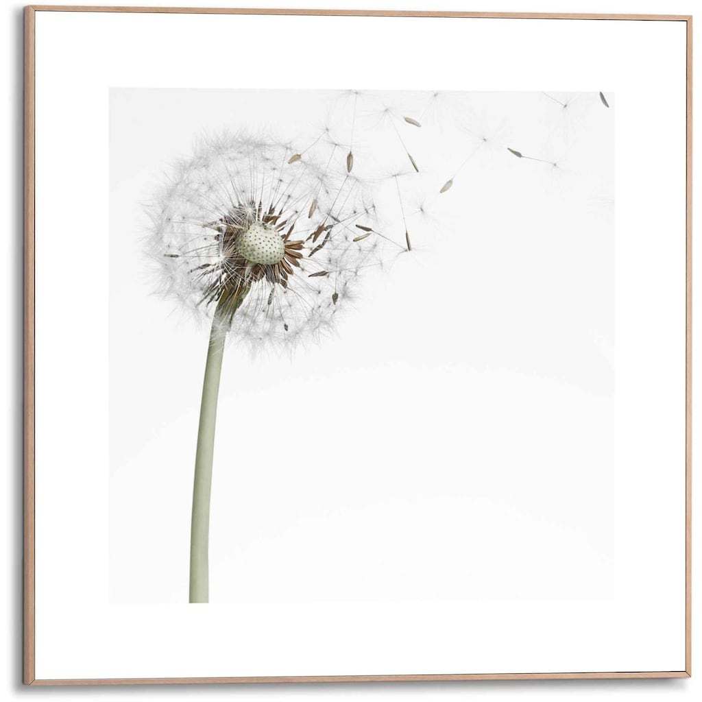 Reinders! Bild »Gerahmtes Bild Pusteblume«, Blumen, (1 St.)