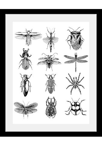 queence Bild »Insekten«, in 3 Größen, gerahmt kaufen
