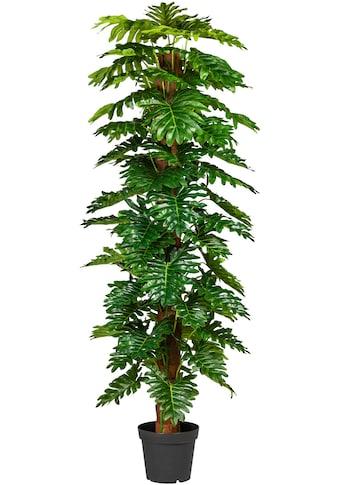 Creativ green Künstliche Zimmerpflanze »Monsterapflanze« kaufen