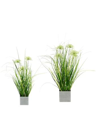 I.GE.A. Kunstpflanze »Gras«, 2er Set kaufen