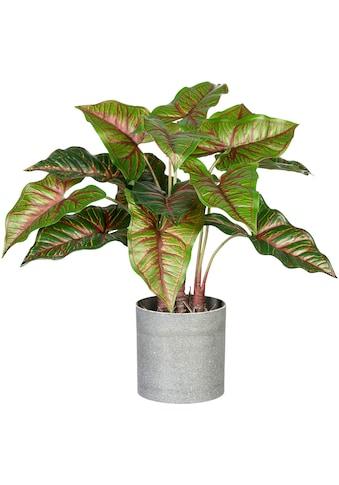 Creativ green Künstliche Zimmerpflanze »Taropflanze«, im Melamintopf kaufen