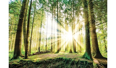 Consalnet Fototapete »Sonniger Wald«, Motiv kaufen