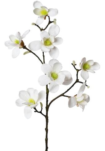 Creativ green Kunstzweig »Zweig Magnolie« kaufen