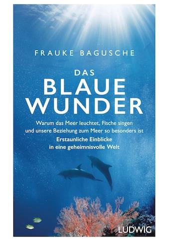 Buch »Das blaue Wunder / Frauke Bagusche« kaufen