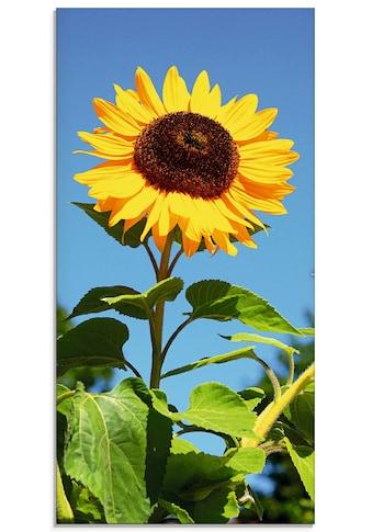 Artland Glasbild »Große Sonnenblume«, Blumen, (1 St.) kaufen