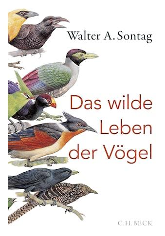 Buch »Das wilde Leben der Vögel / Walter A. Sontag« kaufen