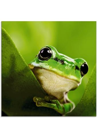Artland Glasbild »Ausspähender Frosch«, Wassertiere, (1 St.) kaufen