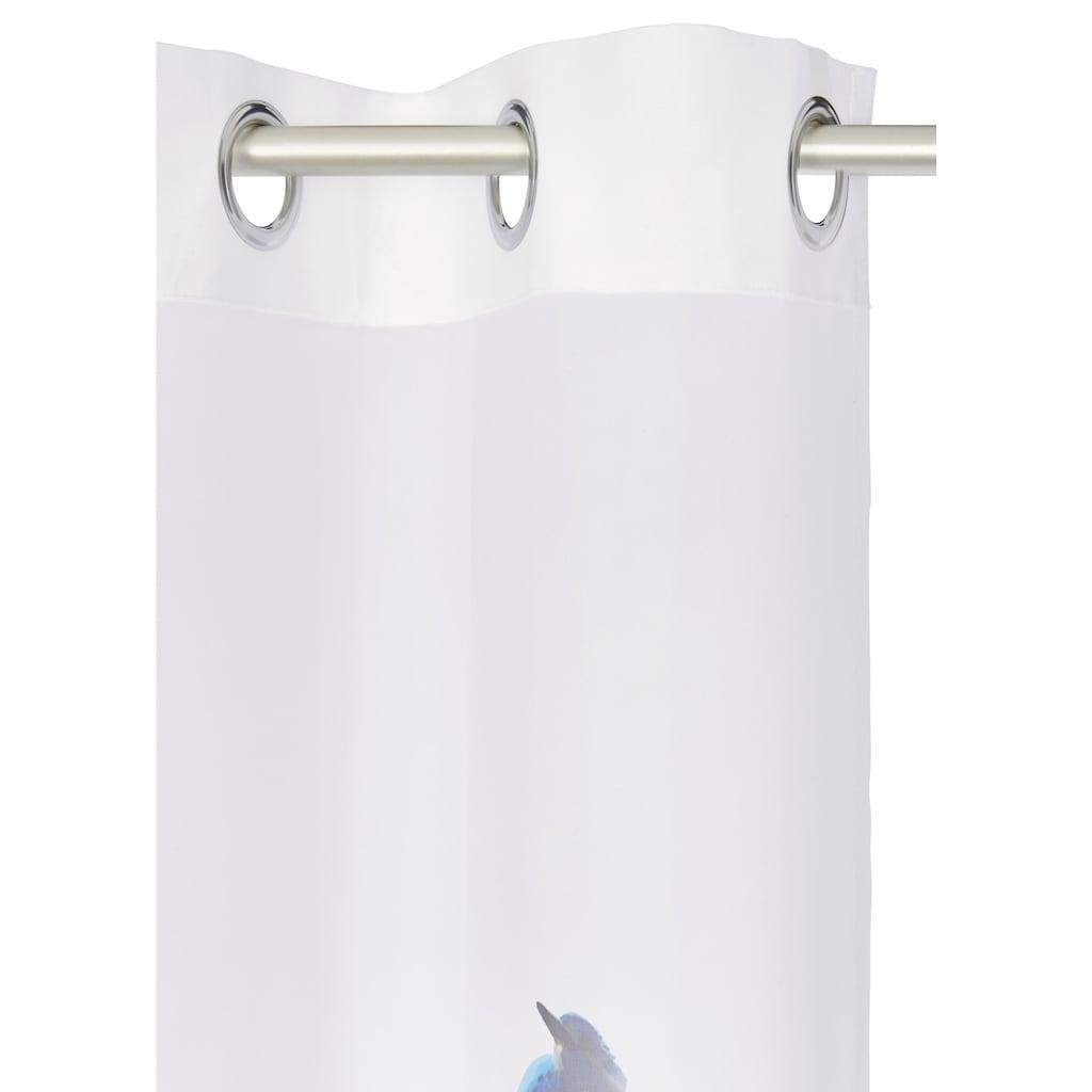 Guido Maria Kretschmer Home&Living Gardine »Eisvogel«, halbtransparent, echter Voile, inklusive Raffhalter