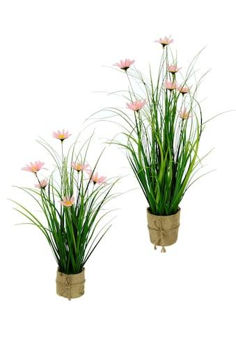 I.GE.A. Kunstgras »Gasbusch«, mit Margeritenblüten und Band, in Jutetopf, 2er Set kaufen