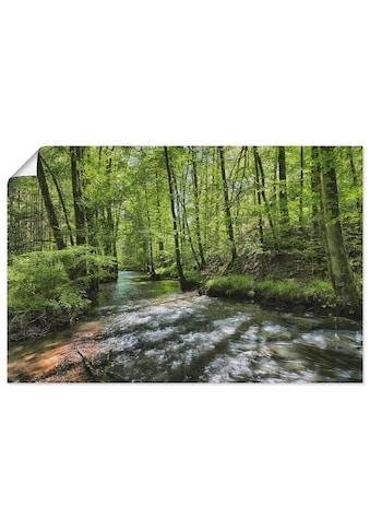 Artland Wandbild »Spessart I«, Wald, (1 St.), in vielen Größen & Produktarten -... kaufen