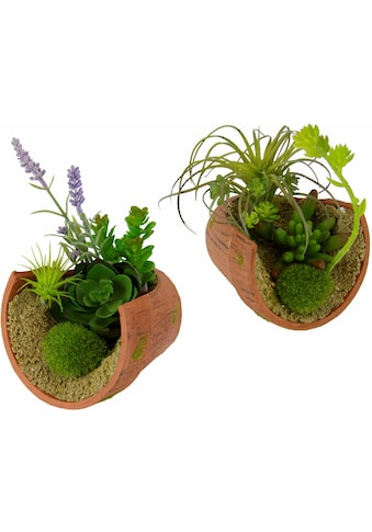 I.GE.A. Kunstpflanze »Succulente« kaufen
