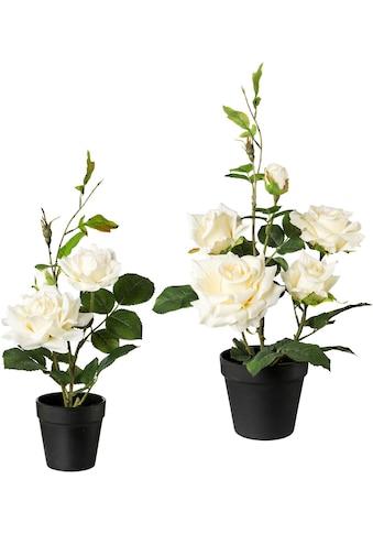 Creativ green Künstliche Zimmerpflanze, 2er Set kaufen