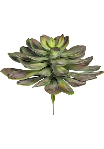 Creativ green Kunstpflanze »Echeveria XXL« kaufen