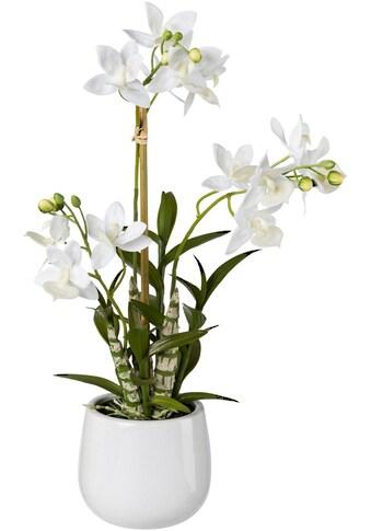 Creativ green Kunstpflanze, Japanorchidee im Keramiktopf, Real Touch kaufen