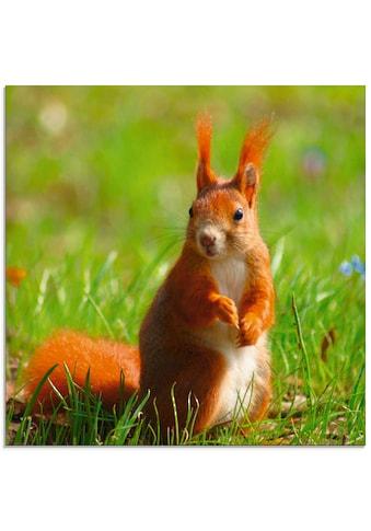 Artland Glasbild »Eichhörnchen Kontakt«, Wildtiere, (1 St.) kaufen