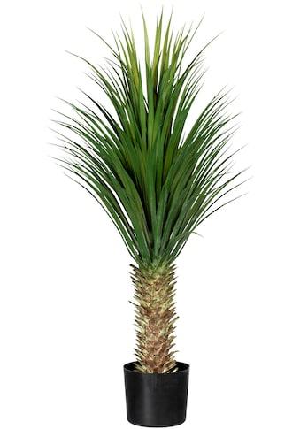 Creativ green Künstliche Zimmerpflanze »Yucca filamentosa« kaufen