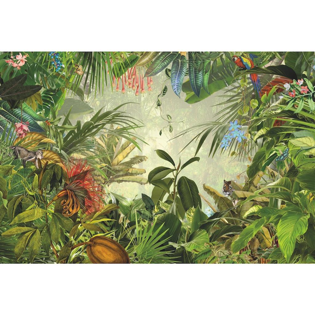 Komar Fototapete »Into the Wild«