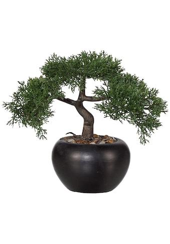 Creativ green Kunstbonsai »Bonsai Zeder« kaufen