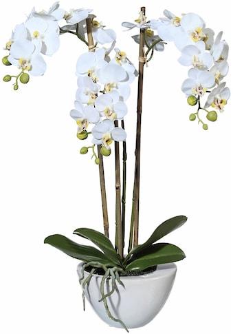 Creativ green Kunstpflanze »Mini Orchidee« kaufen