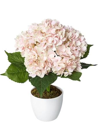 Creativ green Kunstpflanze »Hortensie« (1 Stück) kaufen