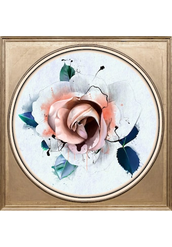 queence Acrylglasbild »Rose Pastell« kaufen