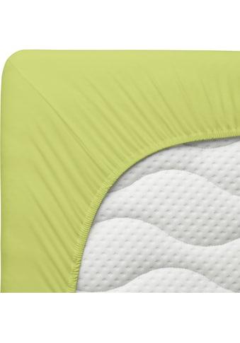Schlafgut Spannbettlaken »Jersey-Elasthan«, für Topper kaufen