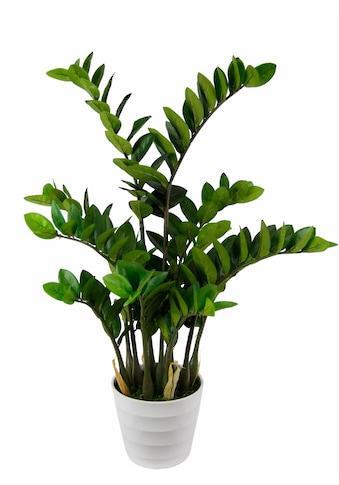I.GE.A. Kunstpflanze »Tropenwurz« kaufen