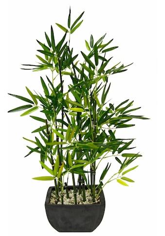 I.GE.A. Kunstpflanze »Bambus« kaufen