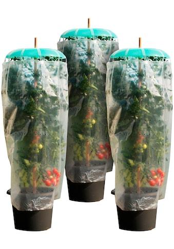 KHW Set: Pflanzenschutzdach »Tomatenhut Starter«, 3 Stk., ØxH: 49x7 cm, inkl. 3 Schläuchen + Folien kaufen