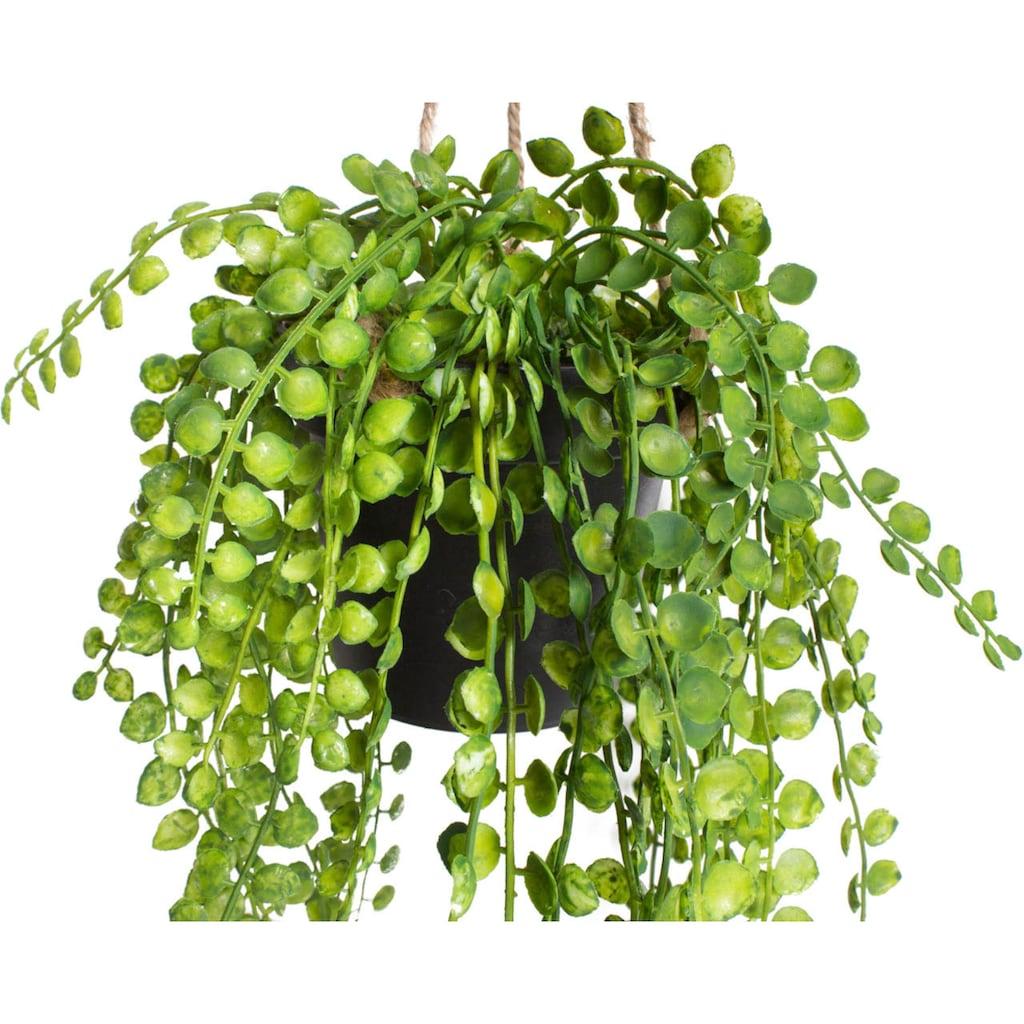 Botanic-Haus Künstliche Zimmerpflanze »Ficus-Pumila-Hängeampel«