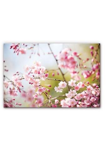 Wall-Art Küchenrückwand »Floral Spritzschutz Kirschblüten« kaufen