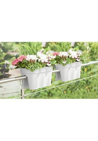 Pflanztopf »Flowerclip XXL« kaufen