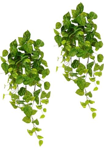 I.GE.A. Kunstpflanze »Pothoshänger«, 2er Set kaufen