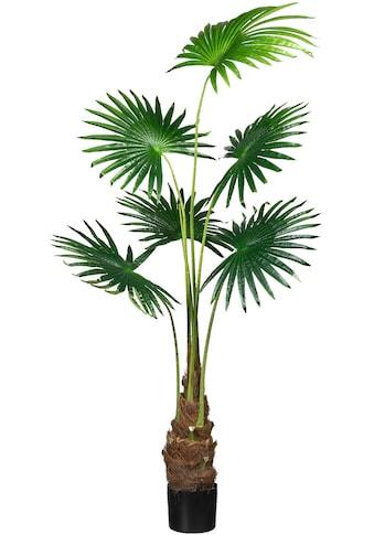 Creativ green Kunstpalme »Fächerpalme« kaufen