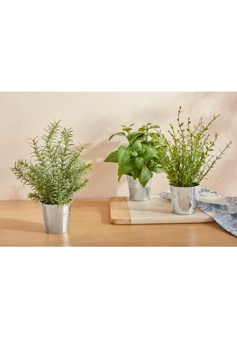 Guido Maria Kretschmer Home&Living Kunstpflanze »Rosamo«, im Zinktopf kaufen