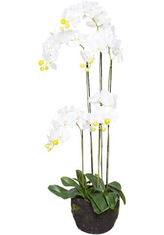 Botanic-Haus Kunstorchidee »Orchidee« kaufen