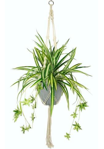 I.GE.A. Künstliche Zimmerpflanze »Wasserlilie«, im Kunststofftopf, mit Hängeampel kaufen