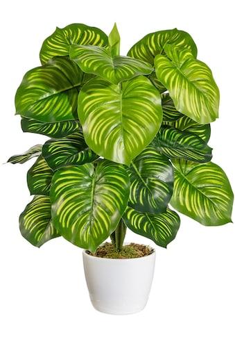 Home affaire Künstliche Zimmerpflanze »Maleroy«, im Keramiktopf kaufen