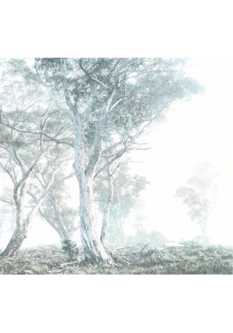 KOMAR Packung: Fototapete »Magic Trees«, aus Vlies kaufen