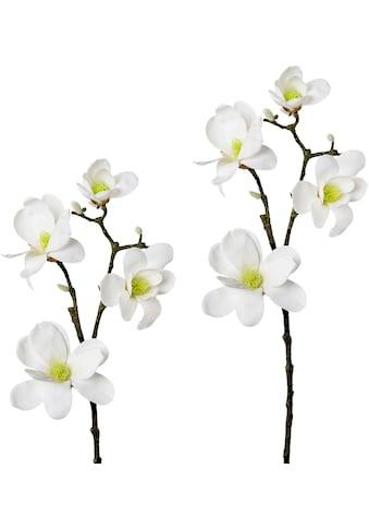 Creativ green Kunstzweig »Zweig Magnolie«, 2er Set kaufen