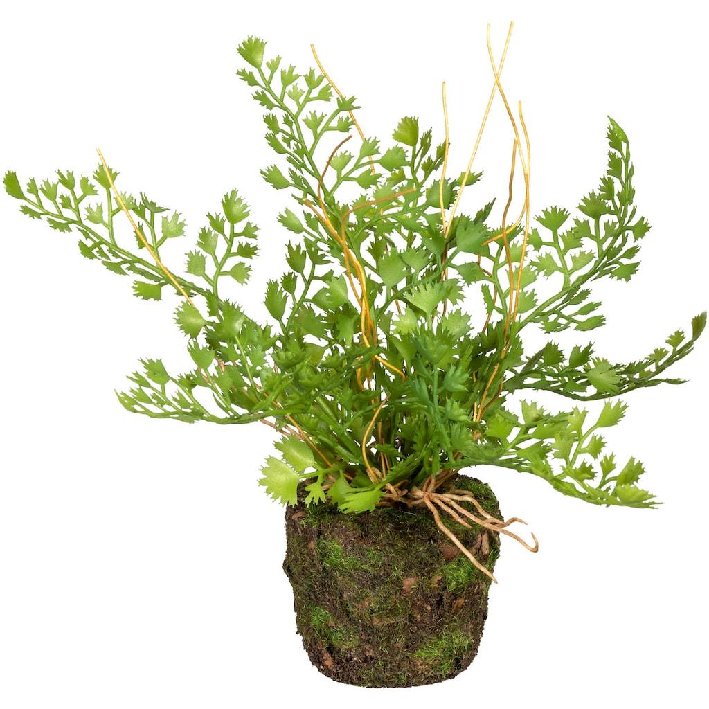 Creativ green Künstliche Zimmerpflanze »Set aus Farnpflanzen auf Wurzelballen«, 3er Set